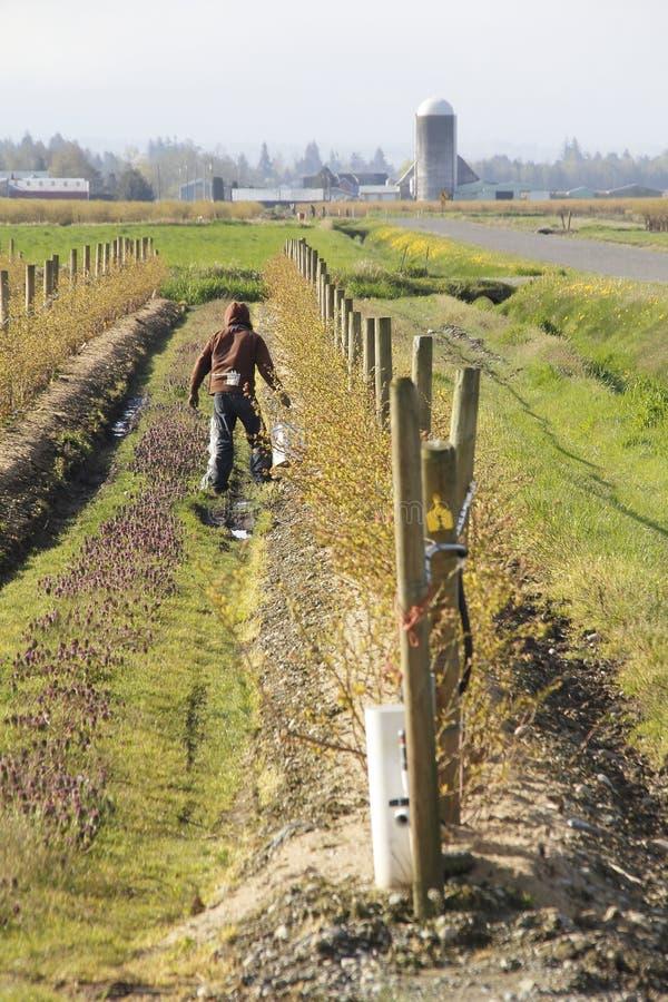 华盛顿农夫施肥庄稼 库存照片