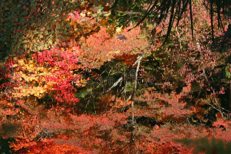 华盛顿州西雅图华盛顿大学植物园秋色 图库摄影