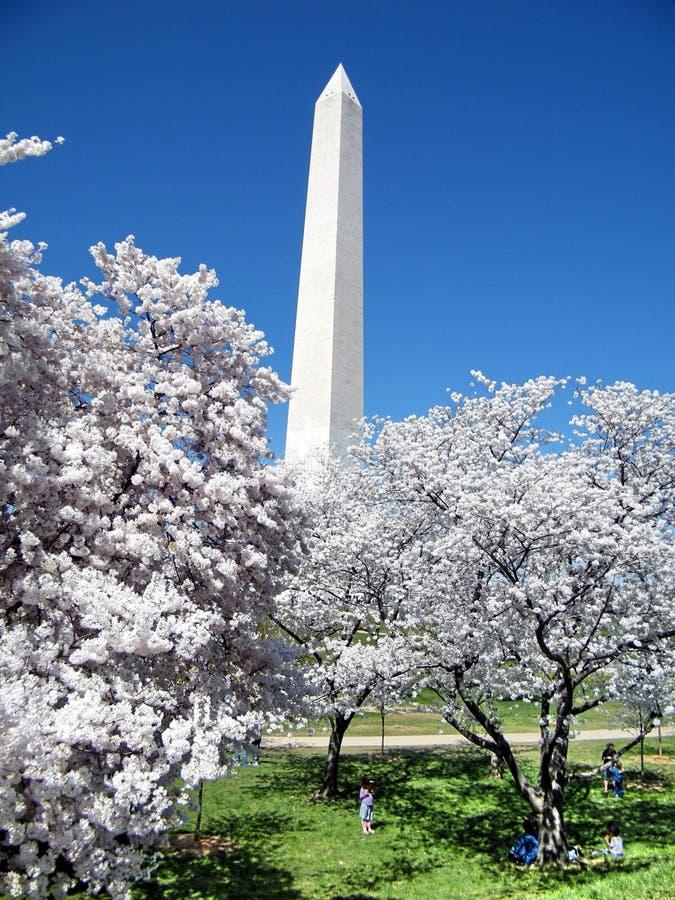 华盛顿樱花树和纪念碑2010年 库存照片
