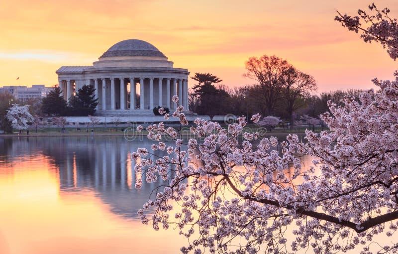 华盛顿特区樱花节日日出 图库摄影