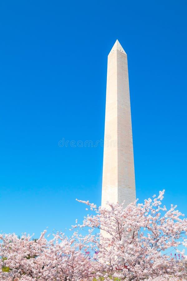 华盛顿特区,美国- 2019年4月1日:华盛顿纪念碑,樱花节日 免版税库存照片