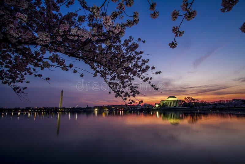 华盛顿纪念碑和杰斐逊纪念品从潮水坞在日出在樱花节日期间 免版税图库摄影
