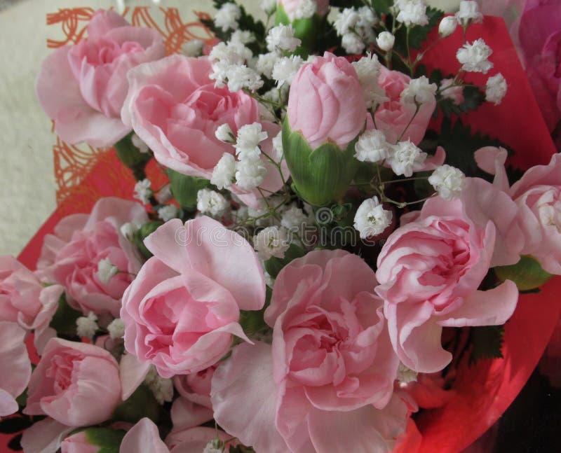 华美的新鲜的有吸引力的桃红色康乃馨花束 免版税库存图片