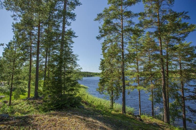 华美的自然风景视图在晴朗的夏日 绿色树和植物在湖附近天空蔚蓝背景的 库存图片