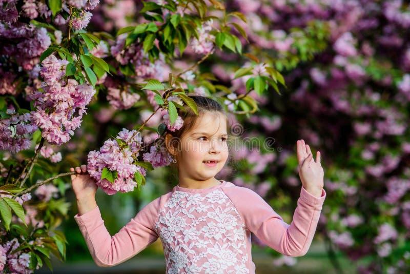 华美的花秀丽 女孩樱桃花背景 E 享用嫩绽放好日子的气味 免版税库存照片