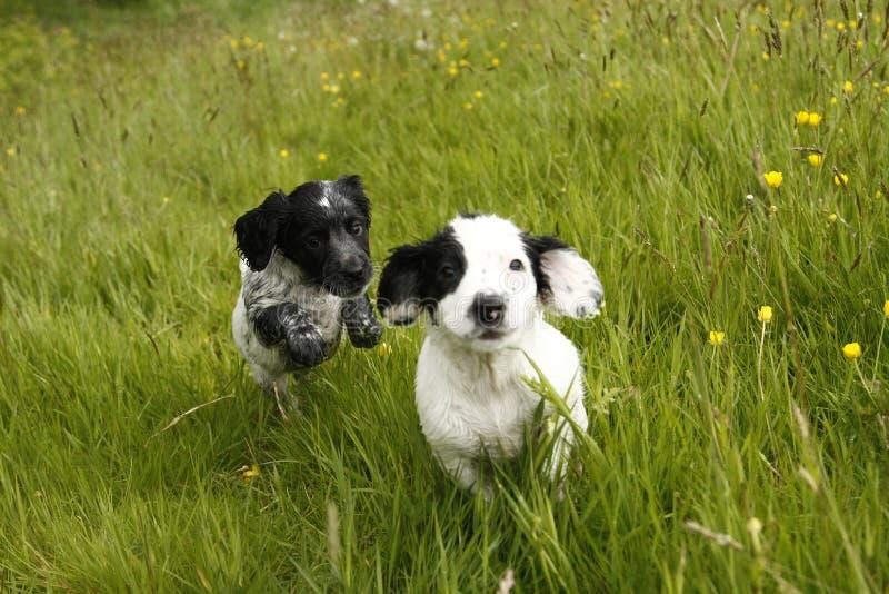 华美的逗人喜爱的小狗 库存照片