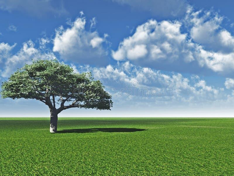 单独分类结构树 库存例证
