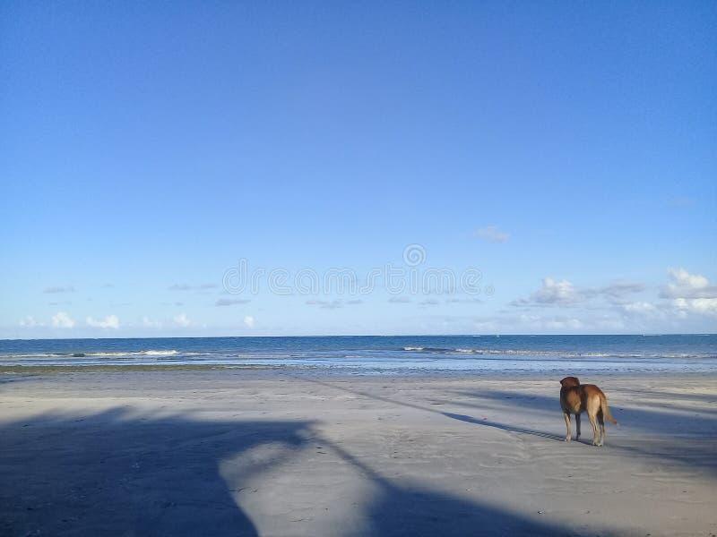单独在海滩的狗 免版税库存照片
