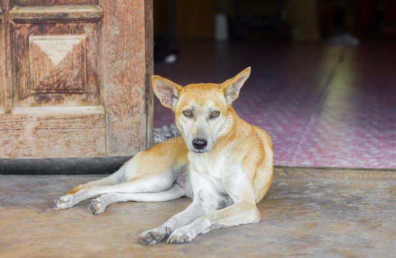 单独坐泰国的狗 免版税库存照片