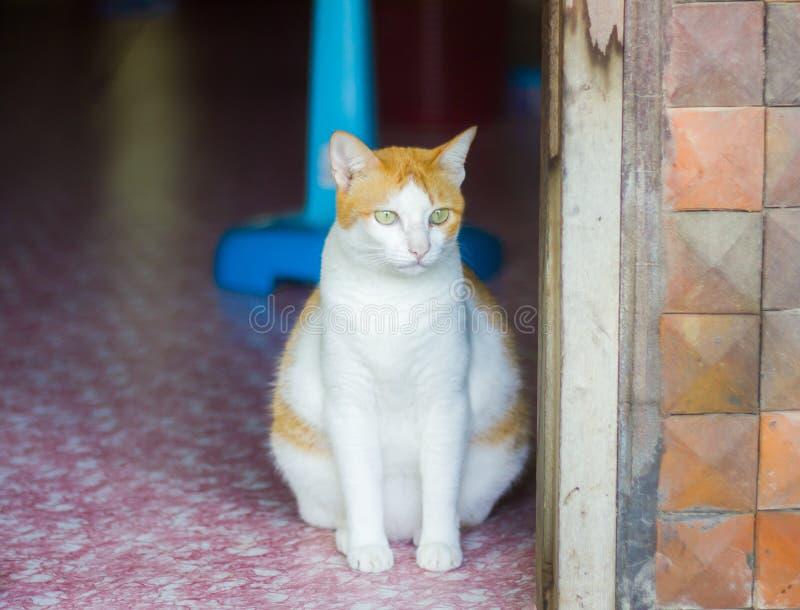 单独坐肥胖的猫 库存照片