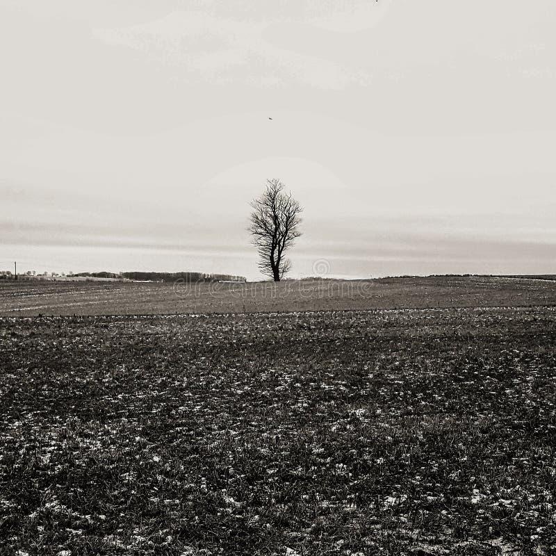 单独树的身分 免版税图库摄影