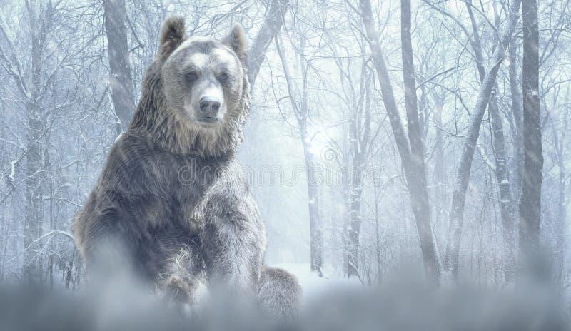 单独棕熊和雪在冬天森林山 与空的拷贝空间的自然和野生生物概念 免版税图库摄影