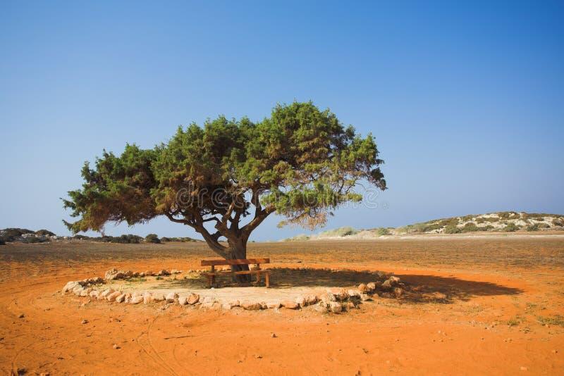 单独沙漠石头结构树 库存照片