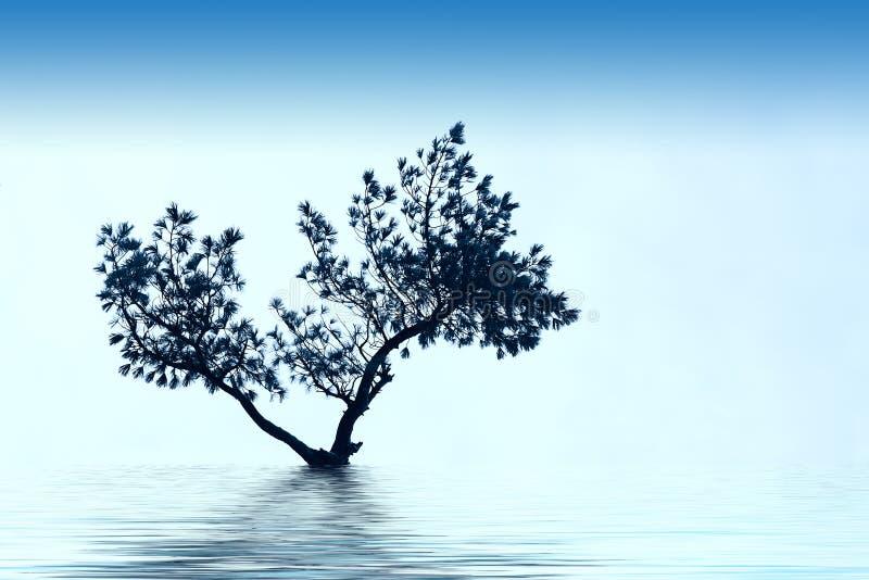 单独生长结构树 免版税库存图片