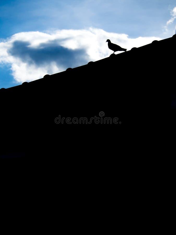 单独站立在屋顶的鸽子 库存照片