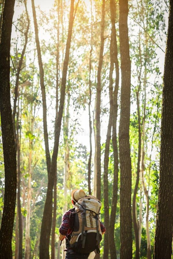 单独站立在森林里的年轻人室外与日落自然  免版税库存照片