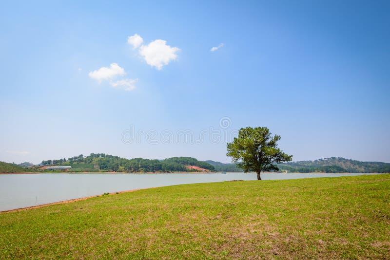 单独美丽的域绿色横向夏天日落结构树 库存照片