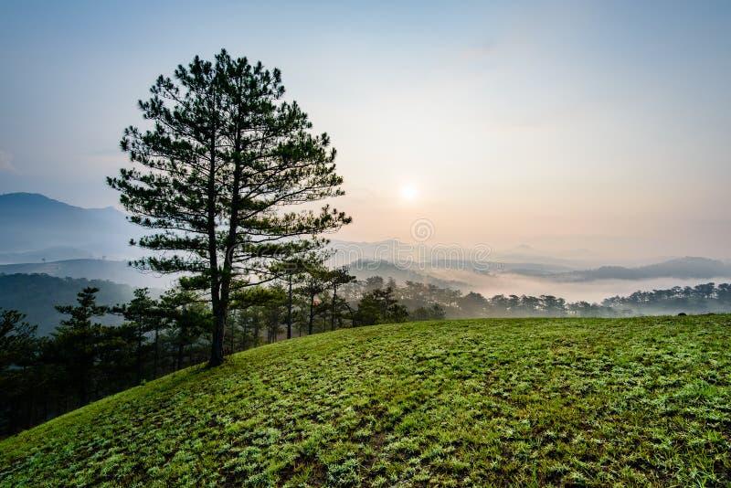 单独美丽的域绿色横向夏天日落结构树 免版税图库摄影