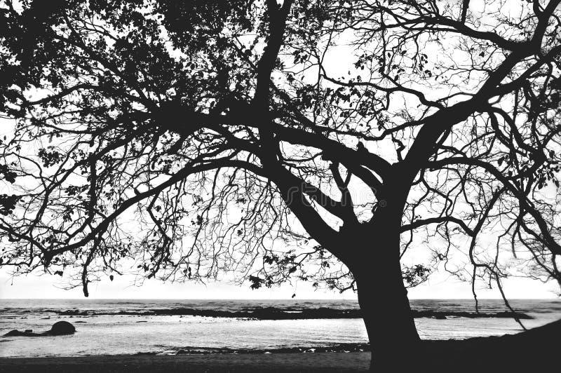 单独美丽的域绿色横向夏天日落结构树 库存图片