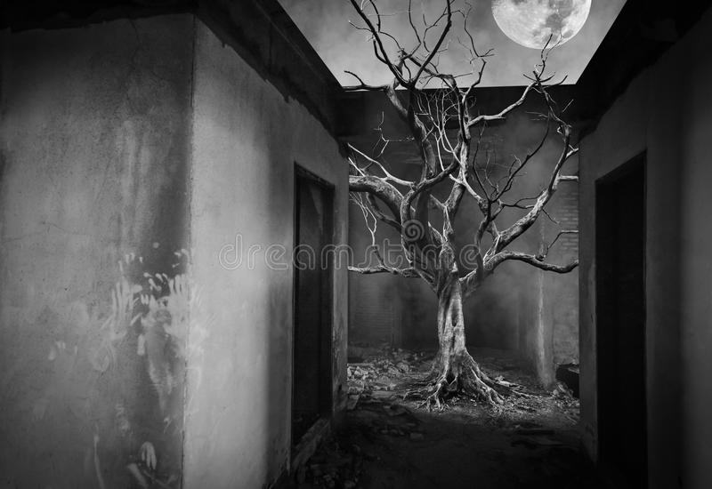 单独老大巨型树在雾和烟背景的,黑白颜色屋子里 向量例证
