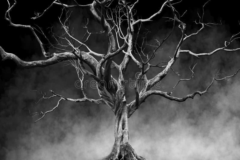单独老大巨型树在雾和烟背景 皇族释放例证