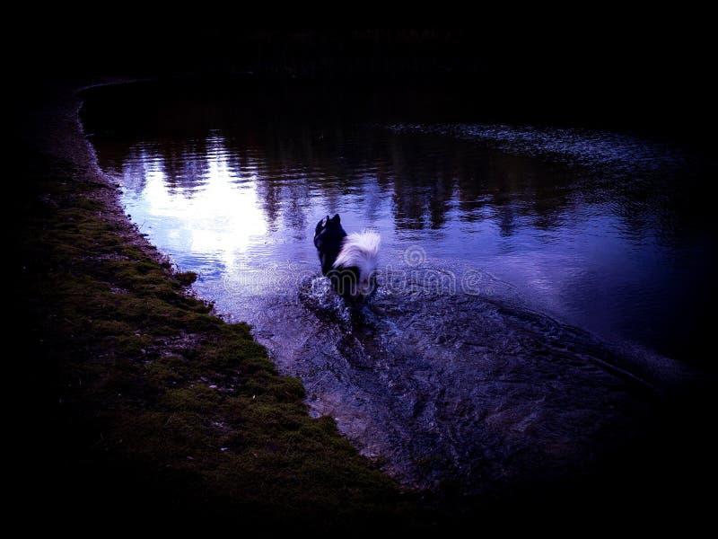 单独走在水中的爱斯基摩的哀伤的看的图片 免版税库存照片
