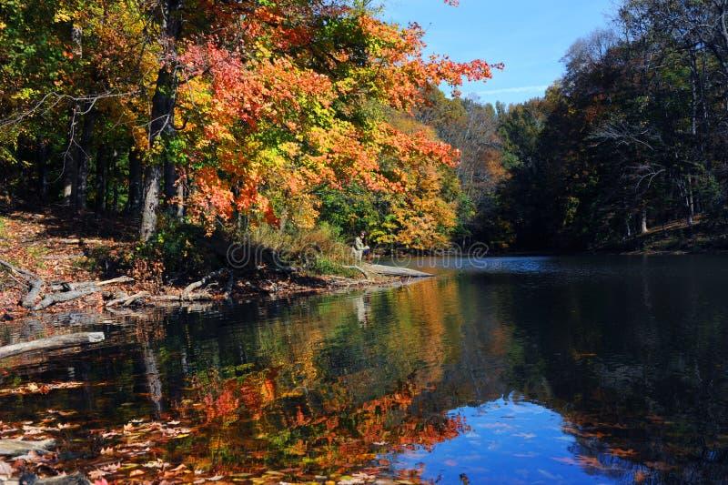 单独Tree湖的时期 免版税库存图片