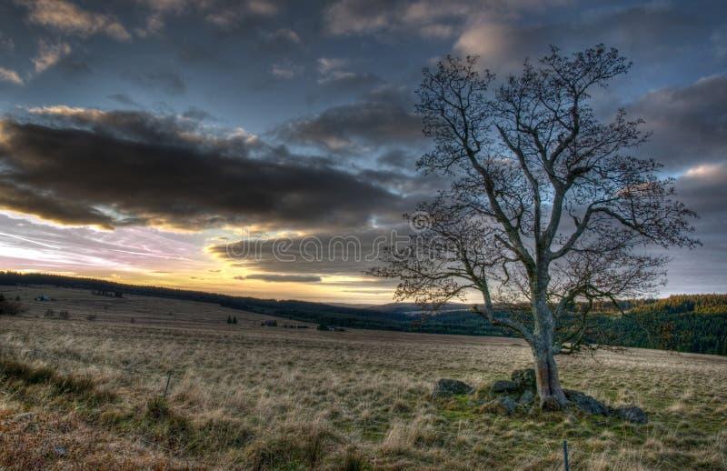 单粒宝石树在厄尔士山脉 免版税库存图片