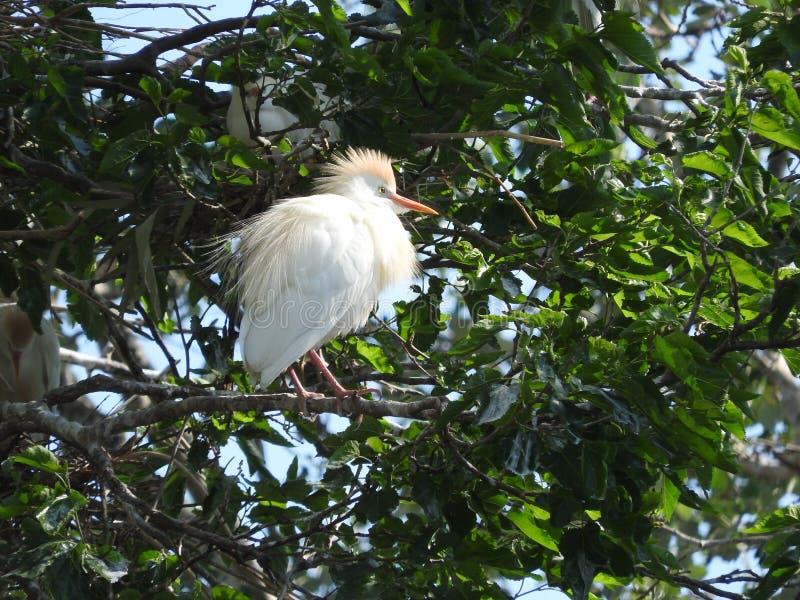 单粒宝石白色birding的坐在早晨太阳 免版税库存图片