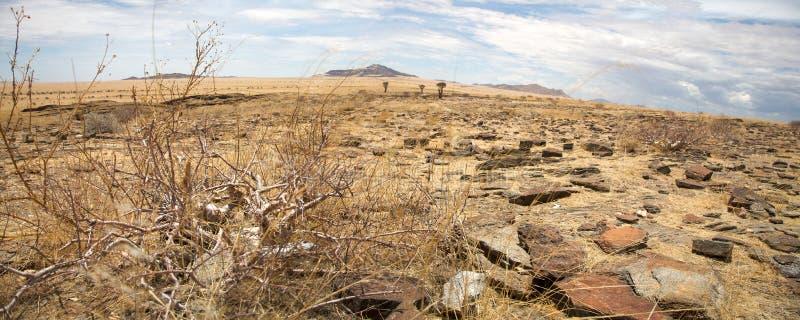 单粒宝石的纳米比亚沙漠 库存照片
