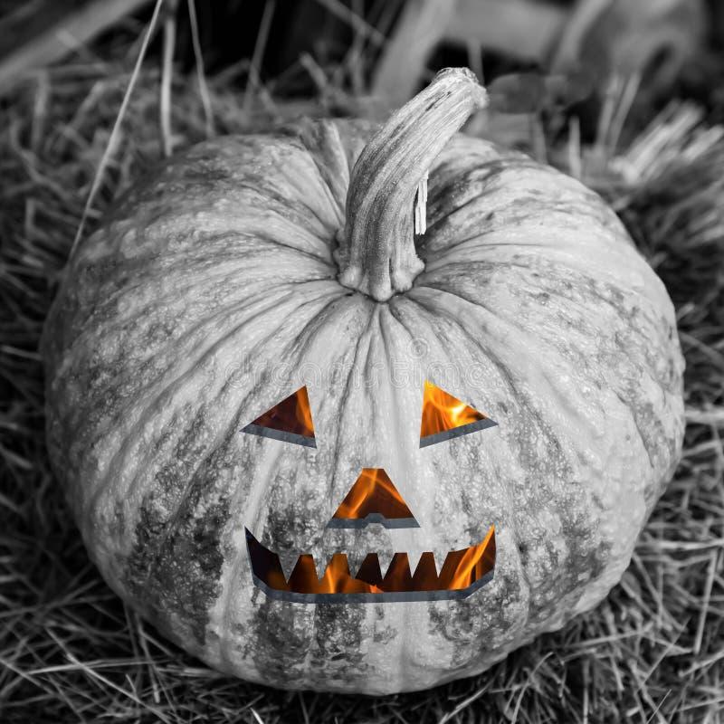 单色南瓜火热的微笑眼睛灯笼起重器恶魔般头可怕的装饰万圣节 免版税库存图片