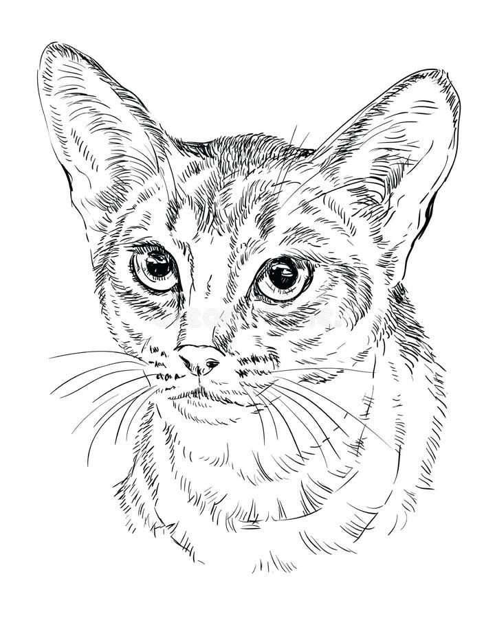 单色埃塞俄比亚猫 向量例证