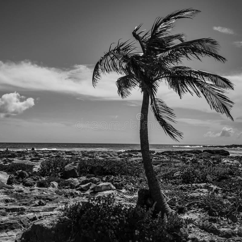 单色棕榈在天堂 免版税图库摄影