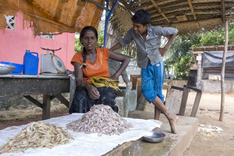 卖在一个靠海滨的摊位的夫人和她的儿子大虾在Negombo,斯里兰卡 库存照片