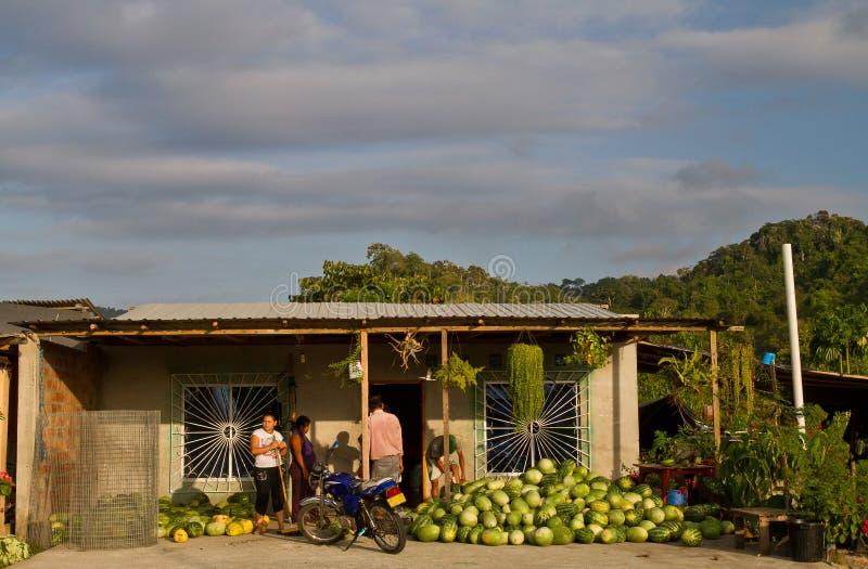 卖大绿色西瓜的未认出的本机 免版税图库摄影