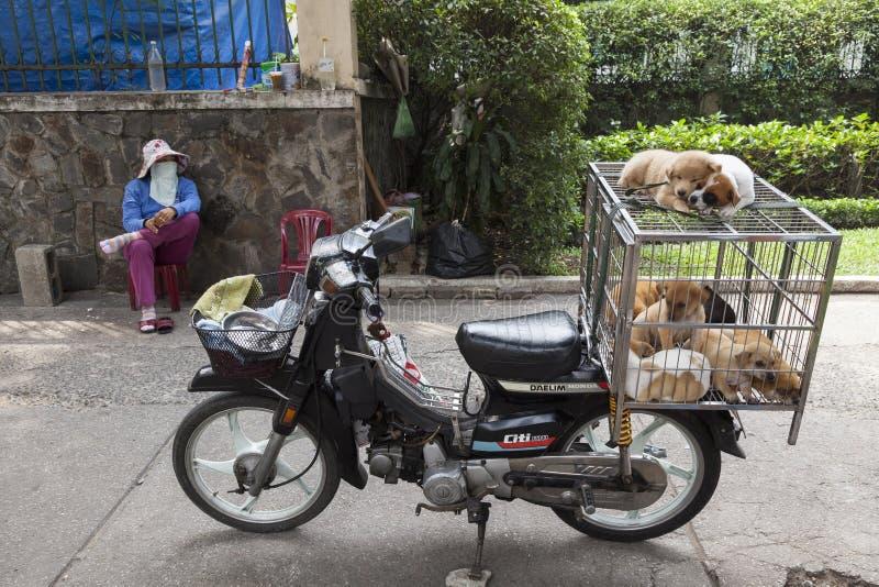 卖小狗om街道 免版税图库摄影