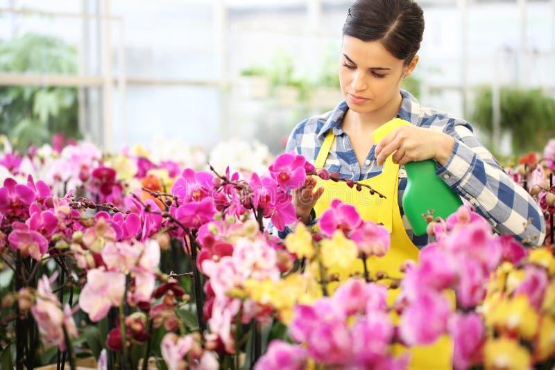 卖花人有喷雾器的妇女手,喷洒在花,保重 库存图片