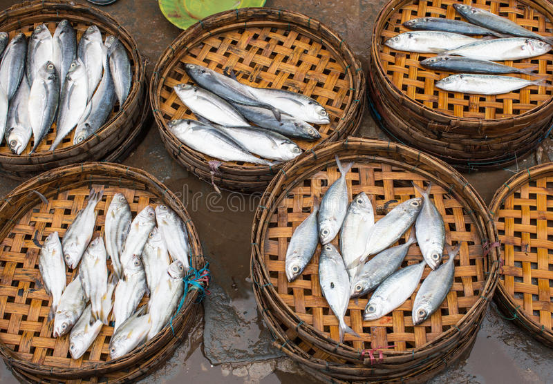 卖鱼在会安市,越南 库存图片