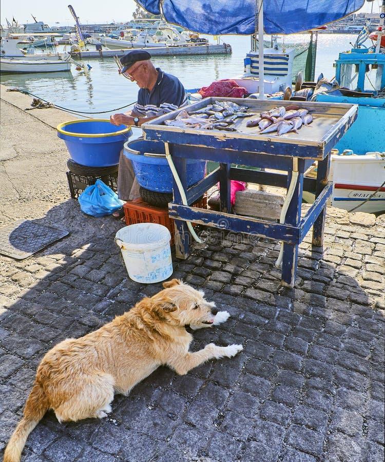 卖鲜鱼的希腊渔夫在Kos捕鱼港口 南爱琴地区,希腊 免版税库存图片