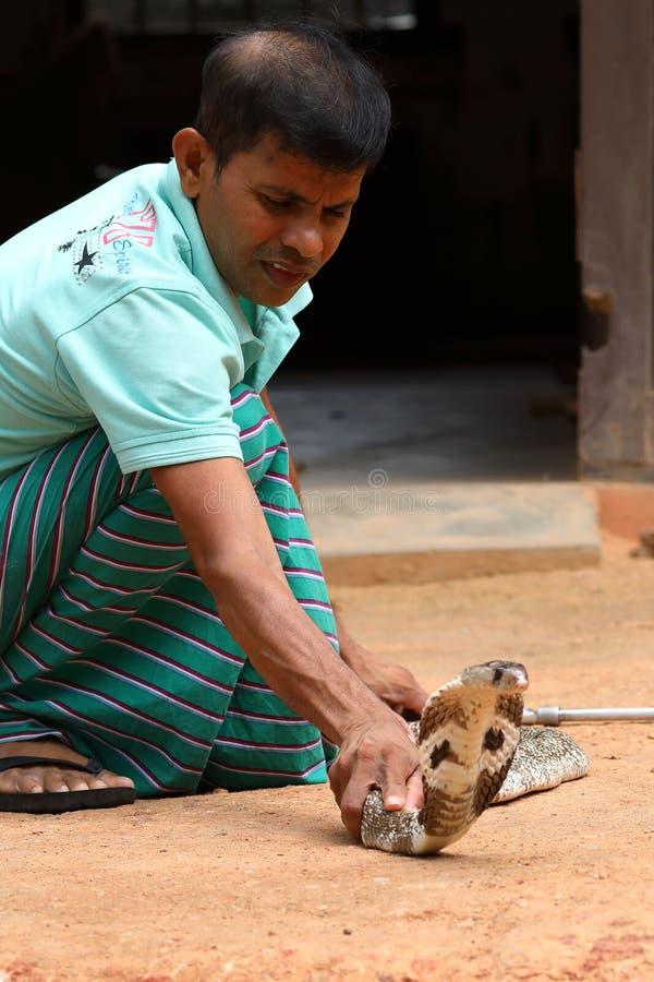 南亚眼镜蛇在斯里兰卡 库存照片