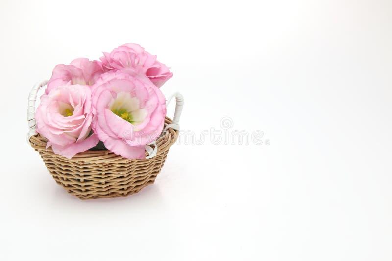 南北美洲香草头状花序在篮子的 图库摄影
