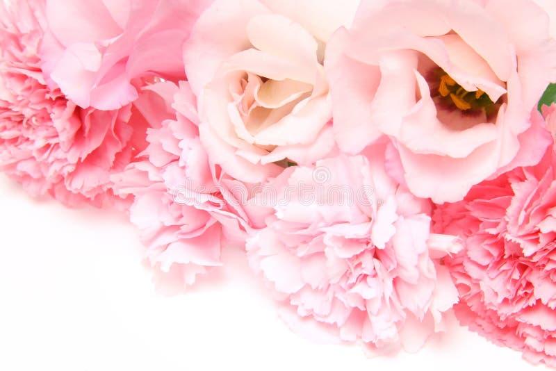 南北美洲香草和康乃馨花束  库存图片