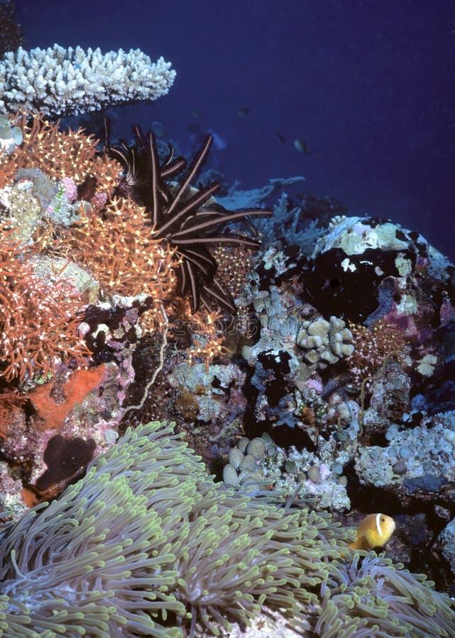 南和平的礁石 免版税库存图片