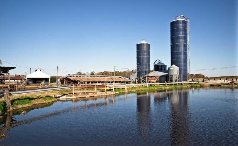 南弗吉尼亚奶牛场 免版税库存照片