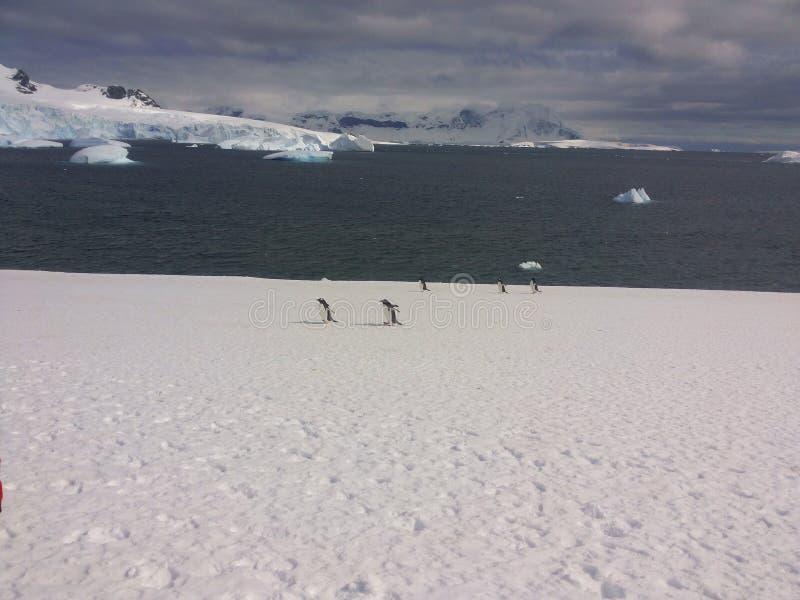 南极横向 免版税图库摄影