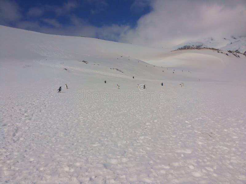 南极横向 免版税库存照片