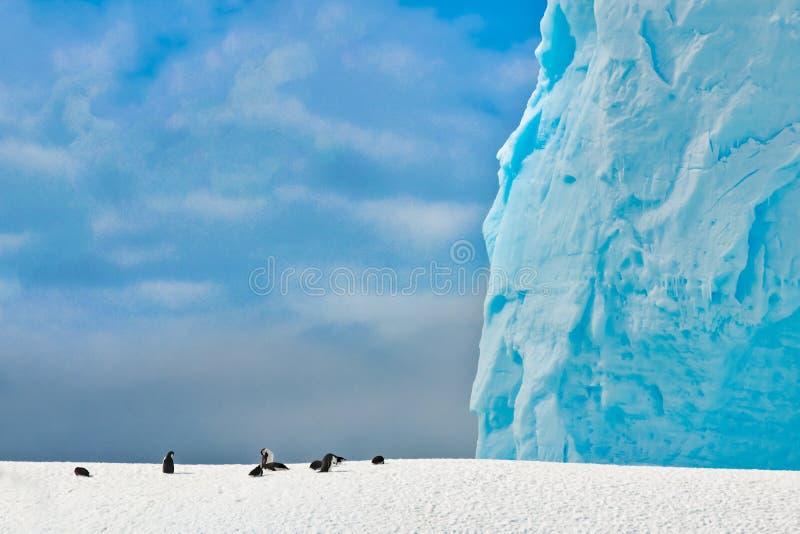 南极毕氏企鹅,在雪覆盖的山上,背景是巨大的绿松石冰山,南极半岛 免版税库存图片