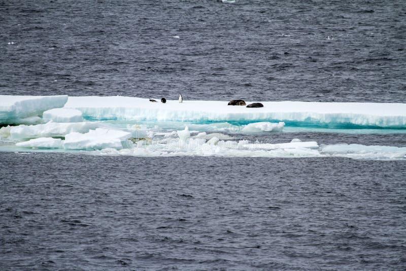 南极洲-浮动冰-全球性变暖 免版税库存图片