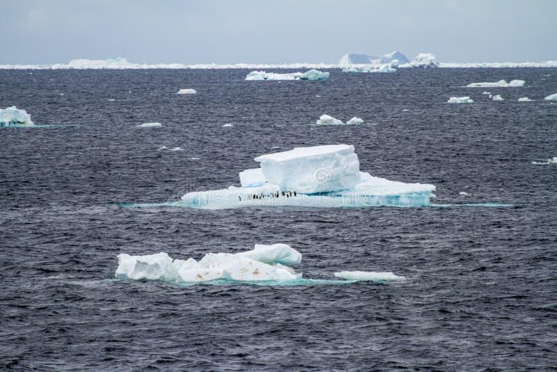 南极洲-浮动冰-全球性变暖 库存图片