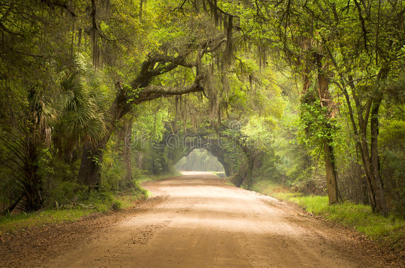 南查尔斯顿深土森林青苔路的sc 免版税图库摄影